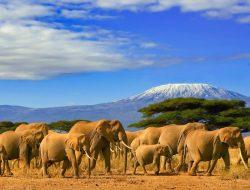 African Safari Wedding with elephants in the savanna